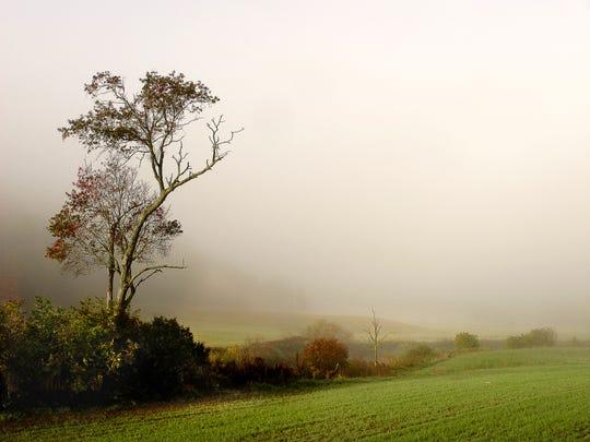 KOvalLone Tree in Fog [Hardwick].jpg