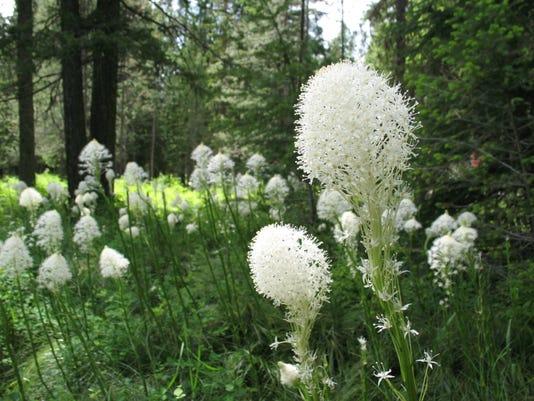 -Glacier Wildflowers.jpg_20110629.jpg