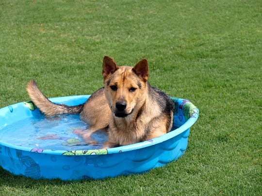 If you must leave your dog outside in the summer, make sure it has plenty of cool water and shade. A baby pool set in the shade where it can cool off is a great idea. Dogs don't sweat and are at greater risk of hyperthermia if their body temperature goes above 105 degrees, which can happen in a matter of minutes and cause irreversible organ damage and a painful death.