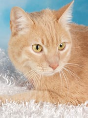 Calvin is available for adoption at 952 W. Melody Ave.