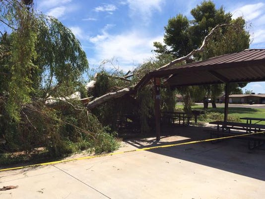 Tree down at Reed Park