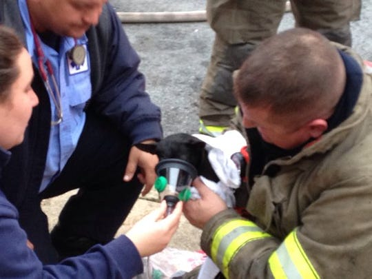 Firefighters rescued two Chihuahuas from a fire Wednesday morning on the 700 block of West Princess Street.