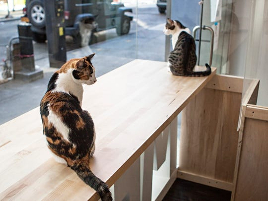 "Cats do some people-watching at Meow Parlour, New York City's first ""cat cafe."""