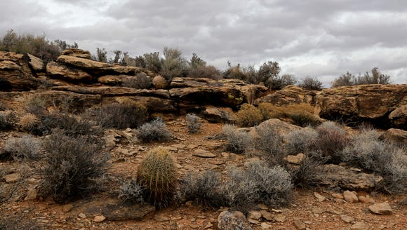 Sagebrush, barrel cactus and creosote are among the