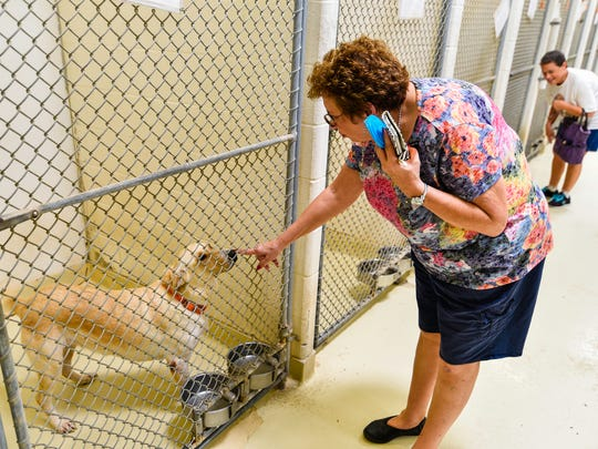 San Angeloans met and adopted numeros pets during a Clear the Shelter event at the animal shelter in August.