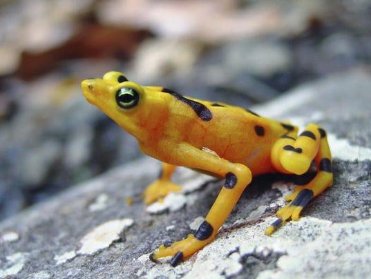 Frog Survival (2)