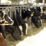Dairy industry hit by lawsuit, owes consumers cash refund