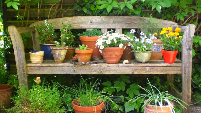 When gardening in containers, consider how much sun and wind it will be exposed to as well as if it has proper drainage.