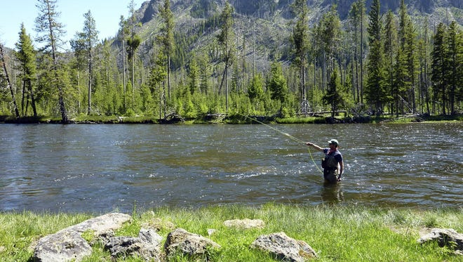 A fisherman casts his line in the upper Madison River in Yellowstone National Park, Montana.