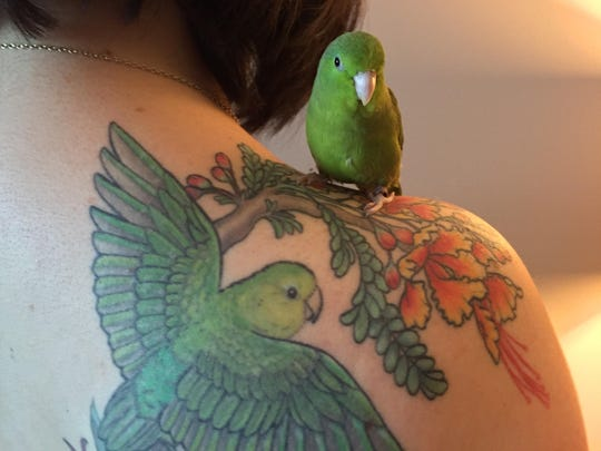 "Beeker, a 6-year-old female spectacled parrotlet, perches on Atina Cote's shoulder with a tattoo of the bird. ""Birds make great pets, but it's important that you have plenty of time for them,"" Cote says."