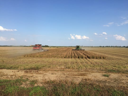 Soybeans being harvested on one of LandFund Partners'