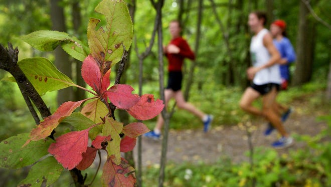 Members of the St. John's University cross-country team finished a mid-September 6-mile training run last year on the trails around Lake Sagatagan in Collegeville.
