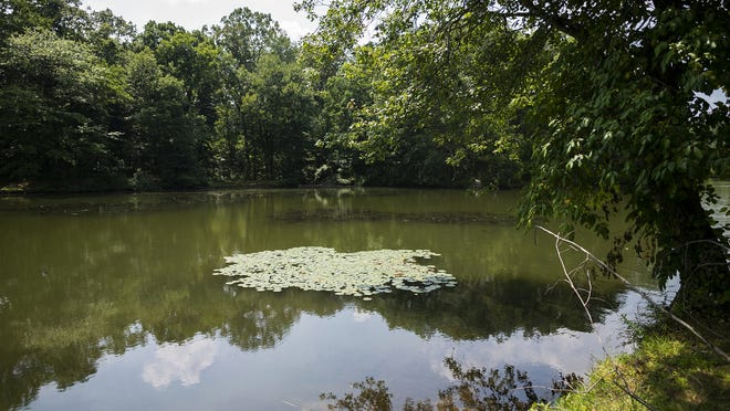 Dorothy Pond in Millbury, where a kayaker on Monday found an unidentifiable dead animal wrapped in duct tape