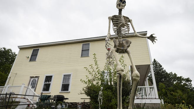 A 12-foot Home Depot skeleton that has gained popularity on social media is displayed in front of a home in Shrewsbury.