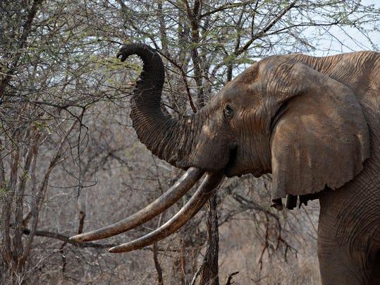 AFP FILES-SPECIES-CITES-UN-ELEPHANTS I EPT KEN -