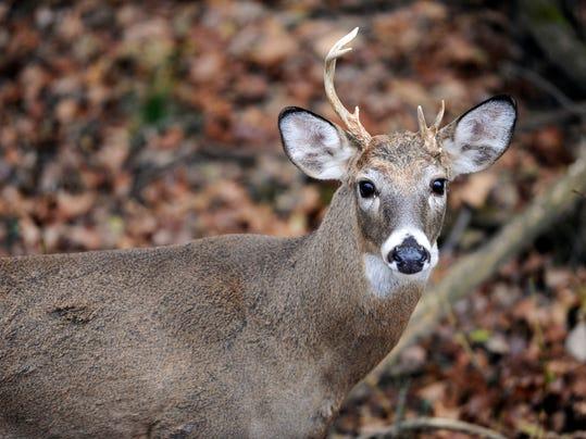 deercheckin deer checkin check in
