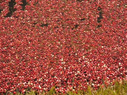 Cranberries-in-marsh.jpg