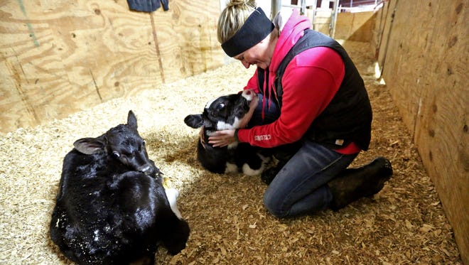 In this Thursday, Oct. 26, 2017, photo, Megan Kregel plays with a newborn calf at Kregel Farms in Guttenberg, Iowa. Kregel works on their parents' farm in Guttenberg with her family. They grow corn, beans and cover crops and milk about 370 cows.
