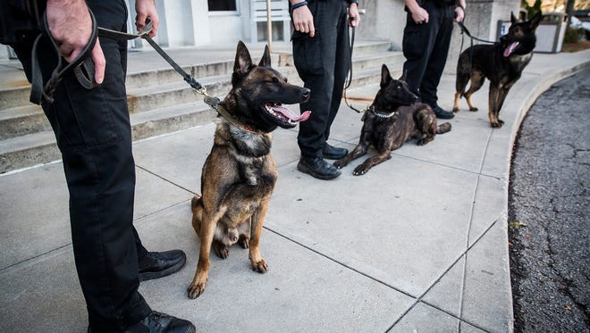 K-9 Basco (left) joins Rasse and Segal, three of four dogs recently purchased by the city, outside of City Hall Friday afternoon.