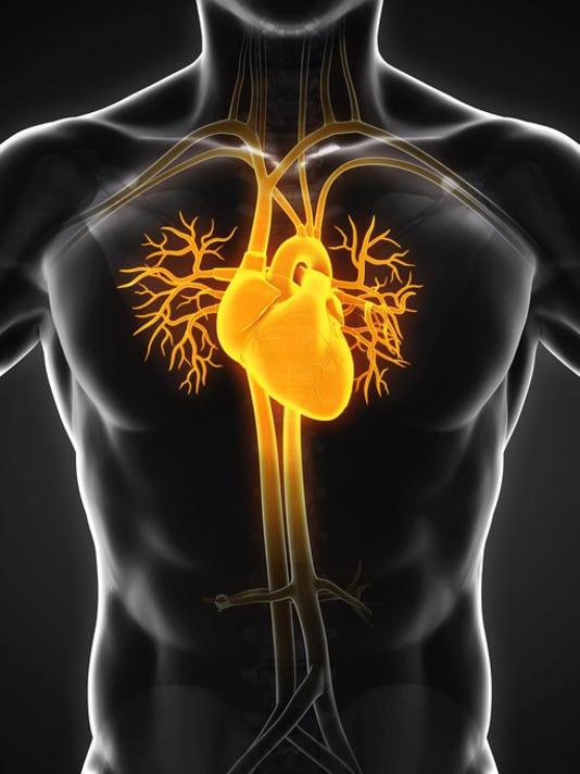 Arteries The Oxygen Lifeline Of Your Body