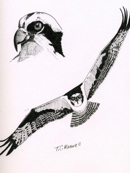 naturally-texas-ospreys.JPG