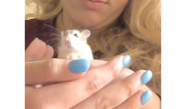 Belen Aldecosea says a Spirit Airlines employee suggested she flush her emotional-support hamster named Pebbles down the toilet because she couldn't bring it on her flight, her attorney Adam Goodman said.