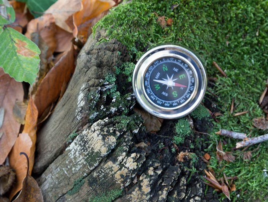 Compass on mossy tree root
