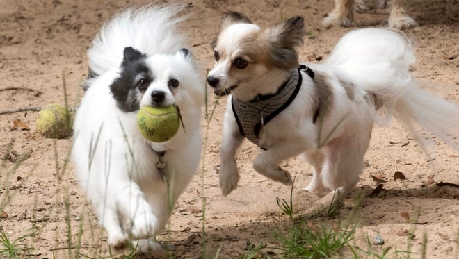 For many pet owners visiting one the many dog parks throughout Pensacola, is a time for socializing not just for their animals but the humans as well.