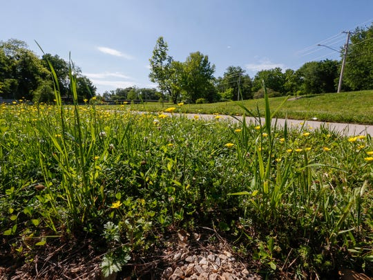Brightly colored wildflowers and grass are allowed to grow at Fassnight Creek on the south side of Bennett Street, between Jefferson and Campbell Avenues, as part of the city's urban meadow program.