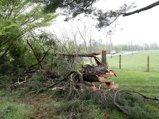 Fallen trees at Stony Kill Farm in Wappingers Falls