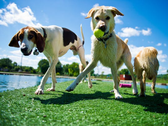 Dogs enjoy a beautiful day at Wags Park in Newtown,