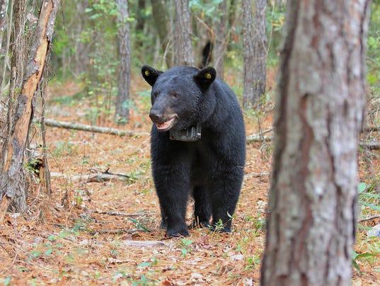 636469448898830820-bears-01.jpg