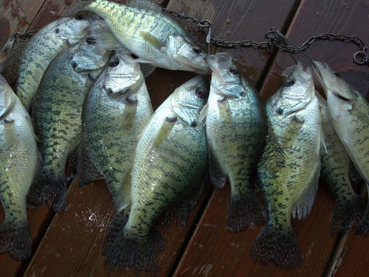 Crappie season a favorite of anglers is coming soon for Crappie fishing lake of the ozarks
