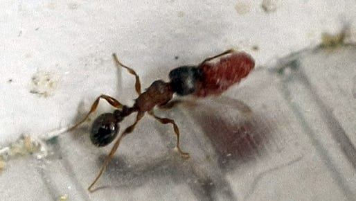 Warm and wet weather in Indiana, including lots of standing water, have Hoosiers facing the prospect of more ants around their homes.