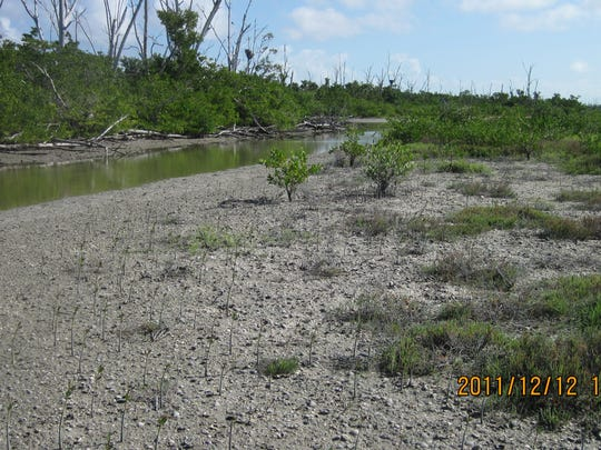 Photo of Sanibel's Clam Bayou taken in 2011.