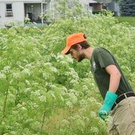 Municipalities take aim at invasive pests before they wreak havoc