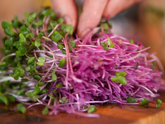 Radish sprouts grown by author Peter Burke in his