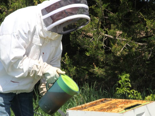 Ray Meylor works with his bees at Cherry Glenn Learning