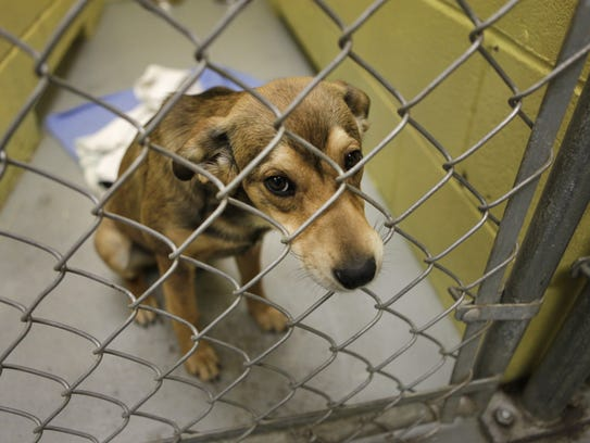 This young dog was available for adoption at Scottsville