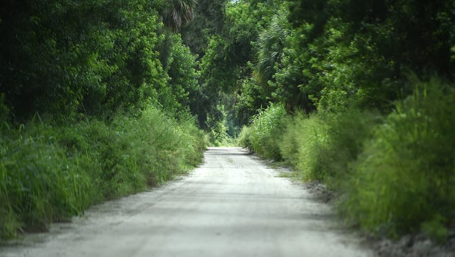 A lush canopy of trees lines the dirt roadway of the north end of the Jungle Trail, just south of the Pelican Island National Wildlife Refuge viewing area, in Indian River County. Jungle Trail is an 8-mile dirt road built in the 1920s north of Vero Beach, and is on the National Register of Historic Places.