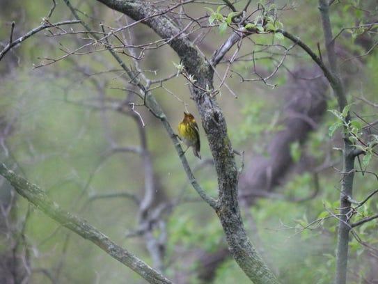 Despite the rain, there were still plenty of species