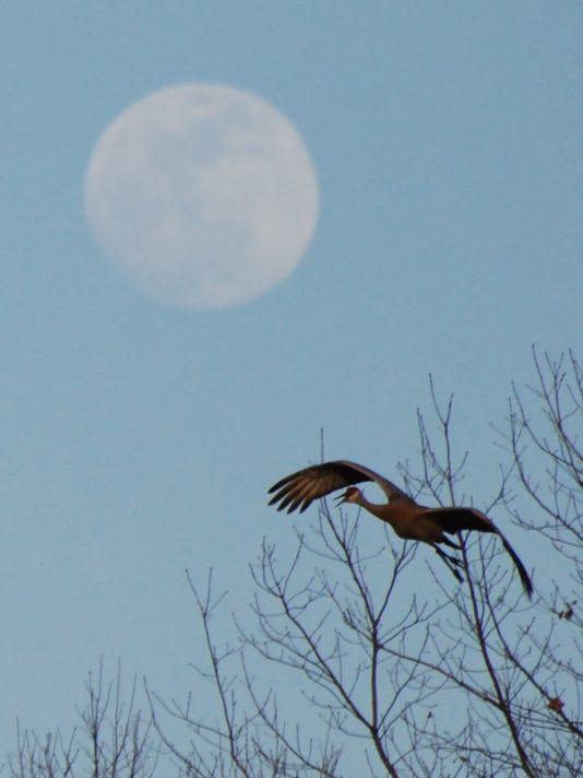 sandhill and moon.jpg