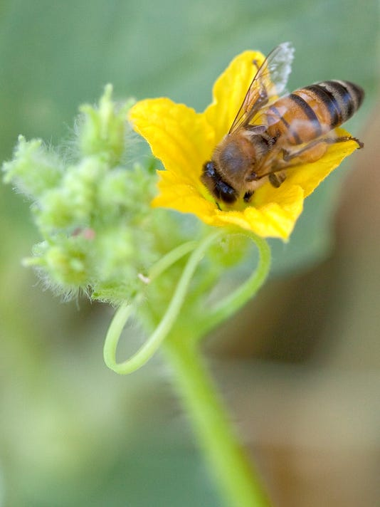 pollinate your vegetables