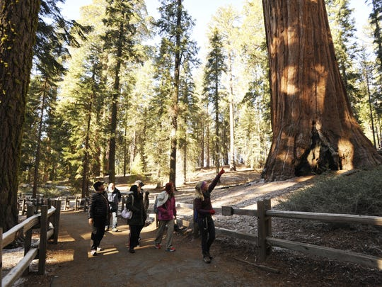 A group in Sequoia National Forest visits the General Grant Tree Trail on a guided walk. The Kings Canyon National Park trail allows visitors to see the General Grant Tree, also known as the Nation's Christmas Tree.