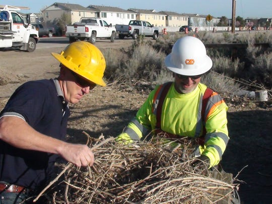 Biolgist David Catalano and an unidentfied worker with Q&D Construction prepare a hawk next to be installed atop a pole off East McCarran Boulevard.