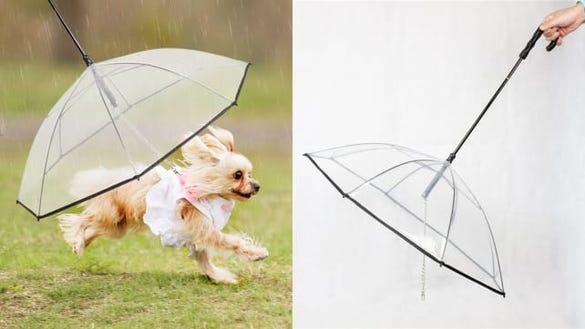 Nice Hyacinth Pet Umbrella