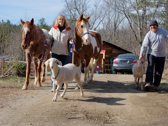 Trish McMillan Loehr and her husband Barry and their horses, Joey, left, and Ben and their goats, Popeye, left, and Hamilton.
