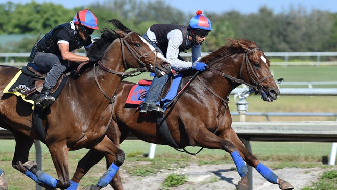 Irish War Cry (inside) works out at the Palm Meadows Training Center ahead of the March 4 Fountain of Youth at Gulfstream Park.