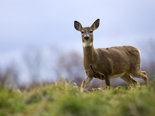 Healthy+deer+-+Michigan.jpg