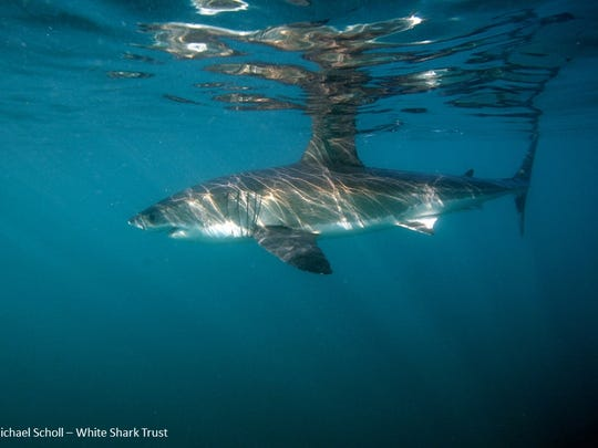 Researchers are finding clues to cancer in shark genes.